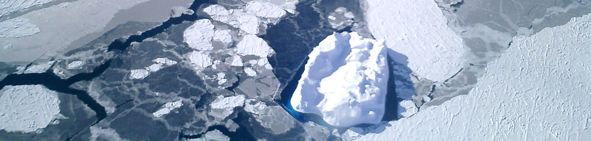 Nila blended into snow-covered sea ice, Anthony Petty, NSIDC